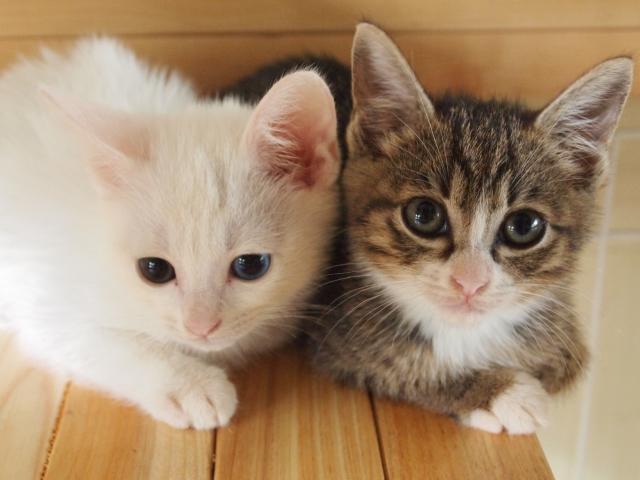 猫のかわいいイラストの簡単な描き方初心者にもできるコツは何