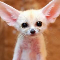 小動物をペットにしたい。飼いやすい種類でもっと …